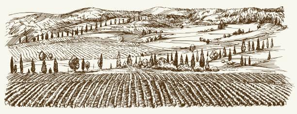 bildbanksillustrationer, clip art samt tecknat material och ikoner med bred utsikt över vingården. vingården liggande panorama. - vineyard
