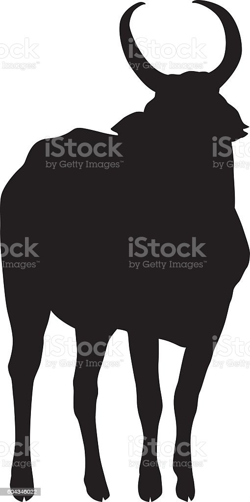 wild african bull silhouette royalty free stock vector art