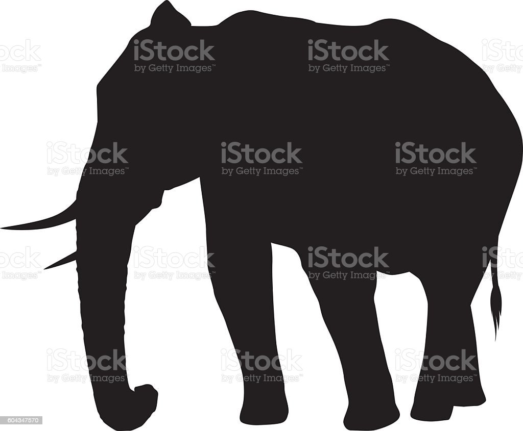 wild african elephant silhouette royalty free stock vector art