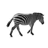 Wild African Zebra Illustration on White Background