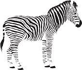 istock Wild African Zebra 611901152