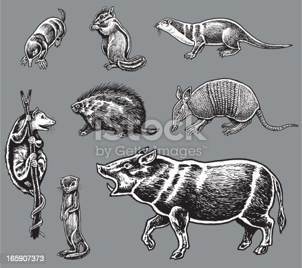 Eight Pen and ink illustrations of wild animals. Mole, Chipmunk, River Otter, Opossum, Porcupine, Armadillo, Prairie Dog and Wild Boar. Check out my