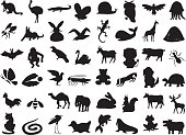 wild and domestic animals silhouette