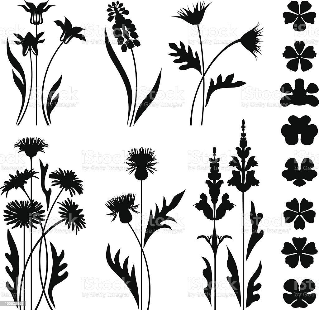 Wild and garden flowers vector art illustration
