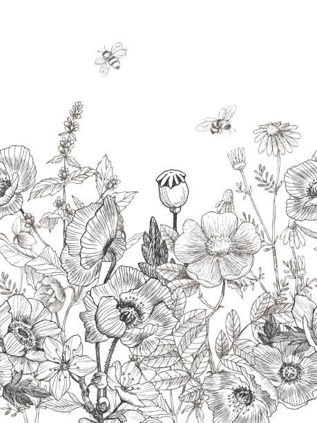 ilustrações, clipart, desenhos animados e ícones de fronteira sem emenda de plantas de selvagem e ervas. vintage botânicos mão ilustrações desenhadas. flores de primavera. - papoula planta