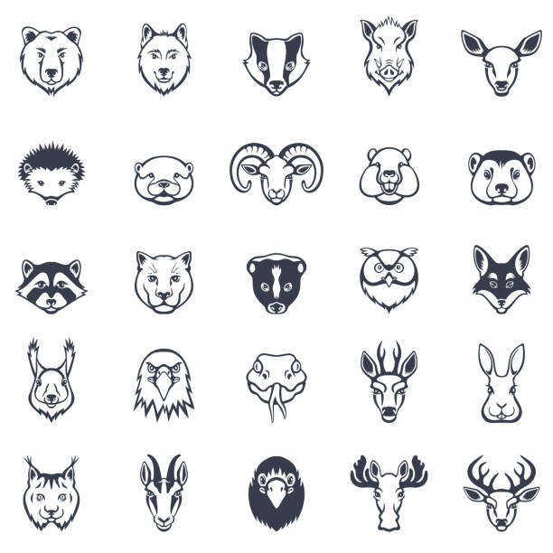 Wild Animal Faces Icon Set Wild Animal Faces Icon Set raccoon stock illustrations