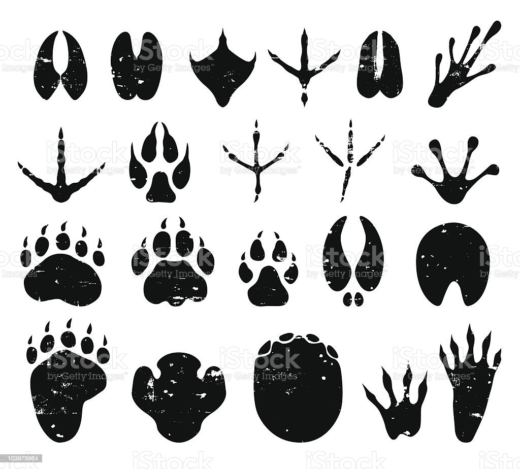 wild animal tracks vector art illustration