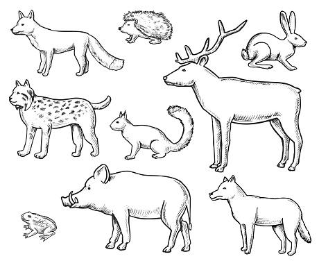 Wild Animals Doodle set