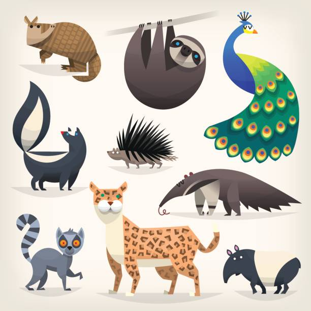 wild animals from savannah, desserts and woods - peacock stock illustrations