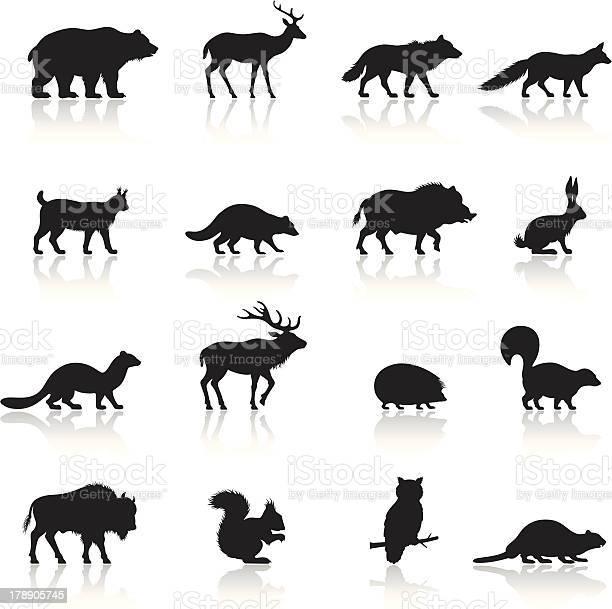 Wild animals icon set vector id178905745?b=1&k=6&m=178905745&s=612x612&h=q62zouzdrr5odgs1azqwdkxymhamtqqk32ntkvhxgva=