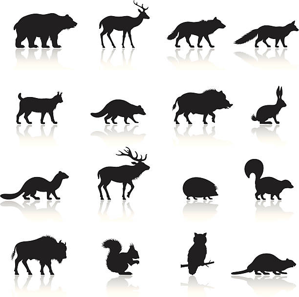 wilde tiere icon-set - fuchs stock-grafiken, -clipart, -cartoons und -symbole