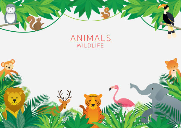 Wild Animals in Jungle, Frame Kids and Cute Cartoon Style zoo stock illustrations