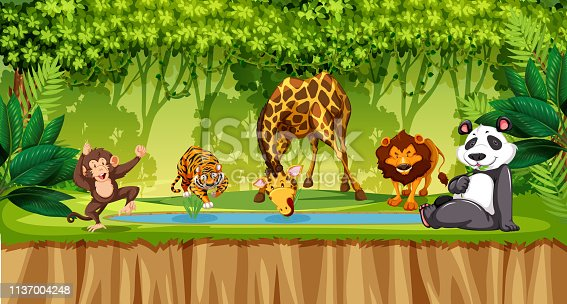 Wild animals in jungle illustration