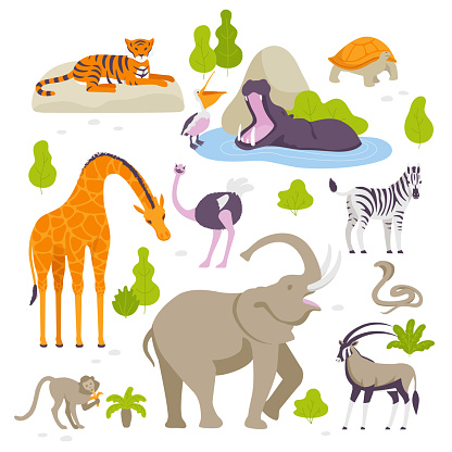Wild animals in the zoo set of vector illustrations in flat design isolated on white background