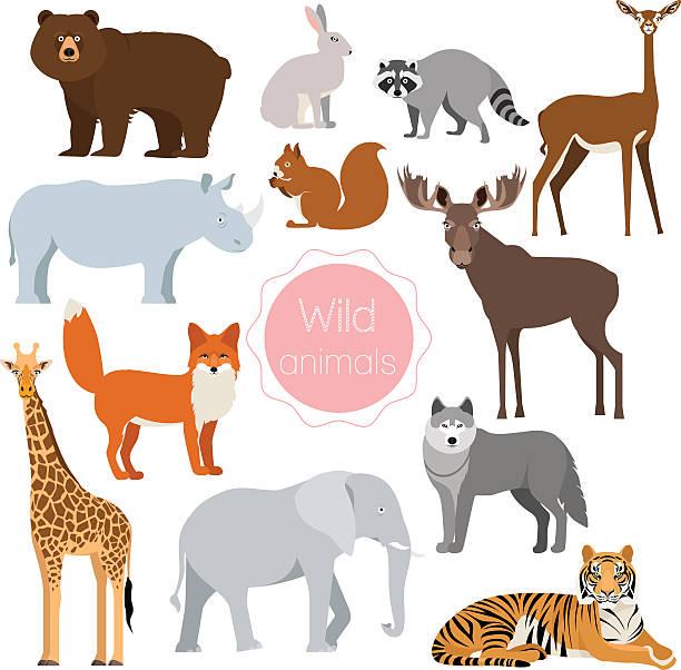 Wild animals set.  Fox, rhino, elephant, bear isolated vector art illustration