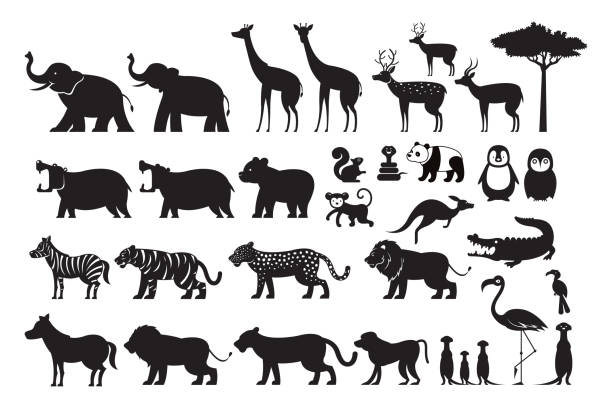 illustrazioni stock, clip art, cartoni animati e icone di tendenza di wild animals silhouette vector set - canide