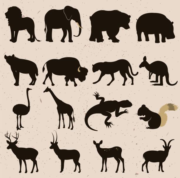 wilde tiere - bergziegen stock-grafiken, -clipart, -cartoons und -symbole
