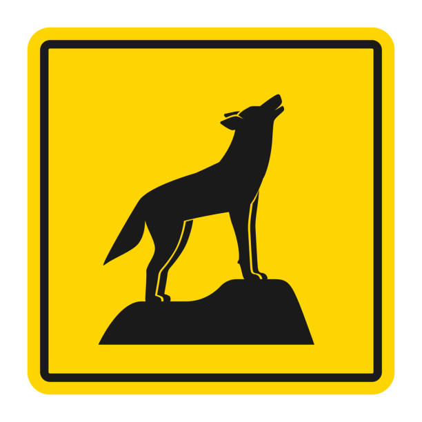 Wild animals yellow road sign. Silhouette of howling wolf Wild animals yellow road sign. Silhouette of howling wolf. Vector illustration silhouette of a howling coyote stock illustrations