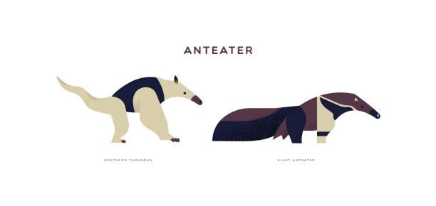 Wild anteater isolated animal cartoon set Wild anteater animal illustration on isolated white background. Educational wildlife set with fauna species name label. Giant Anteater stock illustrations