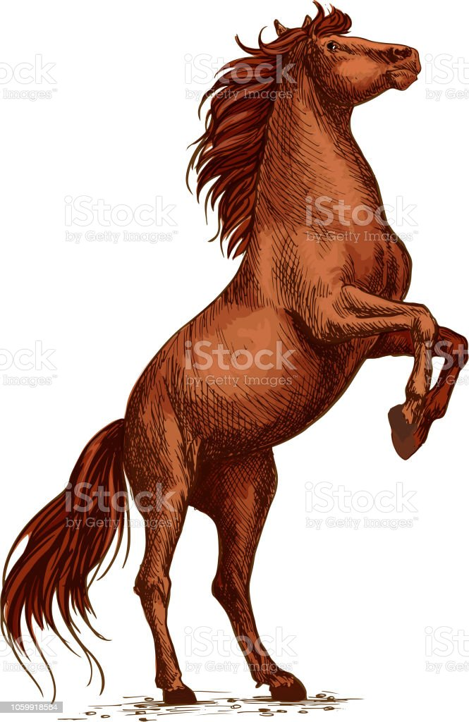 Wild Arabian Horse Stallion Raging And Rearing Stock Illustration Download Image Now Istock