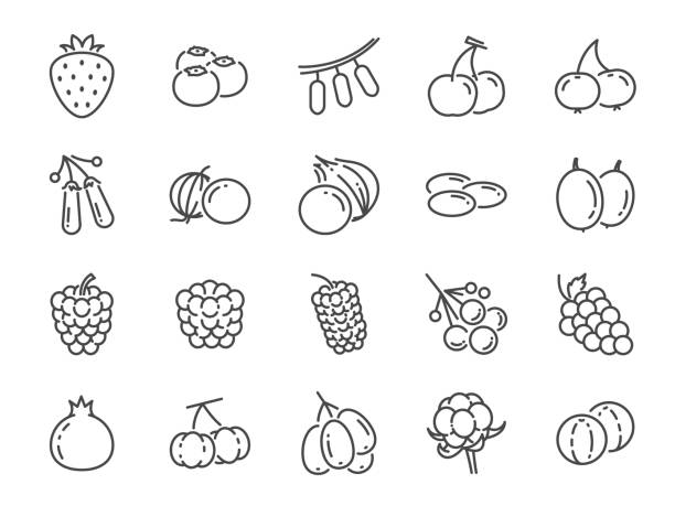 stockillustraties, clipart, cartoons en iconen met wilde bessen lijn pictogramserie. inbegrepen de pictogrammen als bosbessen, cranberry, framboos, aardbei, kers en meer. - bessen