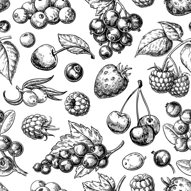 Wild berry seamless pattern drawing. Hand drawn vintage vector background. Summer fruit Wild berry seamless pattern drawing. Hand drawn vintage vector background. Summer fruit set of strawberry, cranberry, currant, cherry, srawberry, blueberry. Detailed organic food for menu, label, banner, tea or jam packaging berry fruit stock illustrations