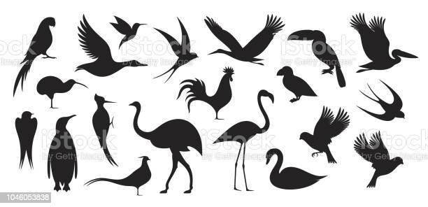 Wild bird bird silhouette vector id1046053838?b=1&k=6&m=1046053838&s=612x612&h=zy3veu8gcjachil4xjs7vtdaha8h mzgilwjpzkmlea=