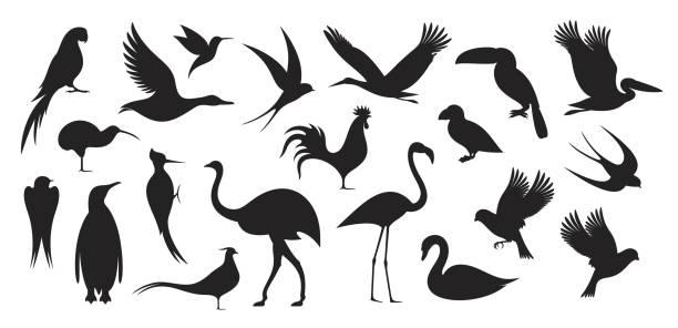 Wild Bird. Bird Silhouette EPS 10. Vector illustration bird silhouettes stock illustrations