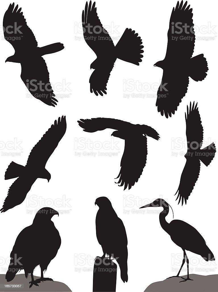 wild Birds royalty-free stock vector art