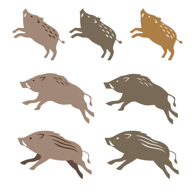 wild boar, animal illustrations - year of the pig stock illustrations, clip art, cartoons, & icons
