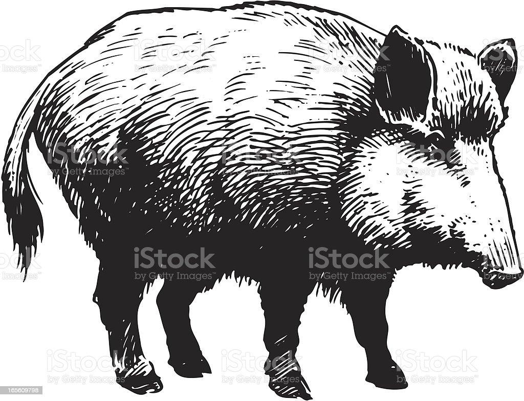 Wild boar vector art illustration