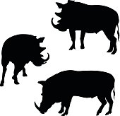 A vector silhouette illustration of three wild boars.