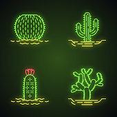 Wild cacti in land neon light icons set