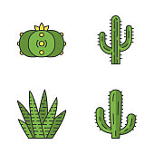 Wild cactus color icons set. Succulents. Cacti collection. Saguaro, peyote, mexican giant and zebra cactuses. Isolated vector illustrations