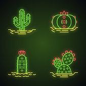 Wild cactuses in ground neon light icons set