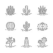 Wild cactuses on ground linear icons set