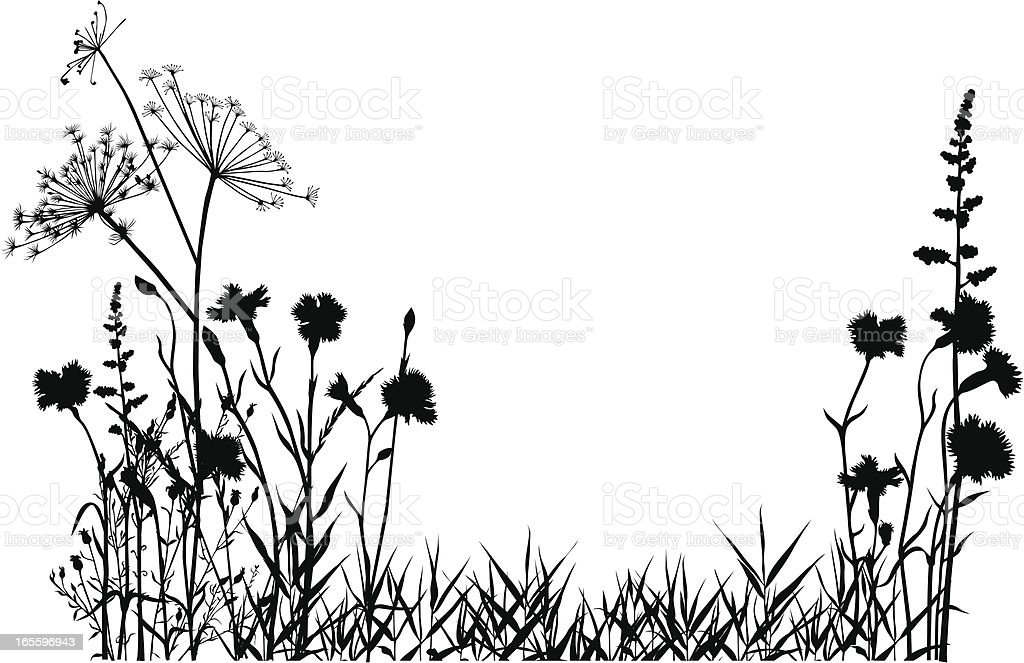 Wild carnations royalty-free wild carnations stock vector art & more images of beauty in nature