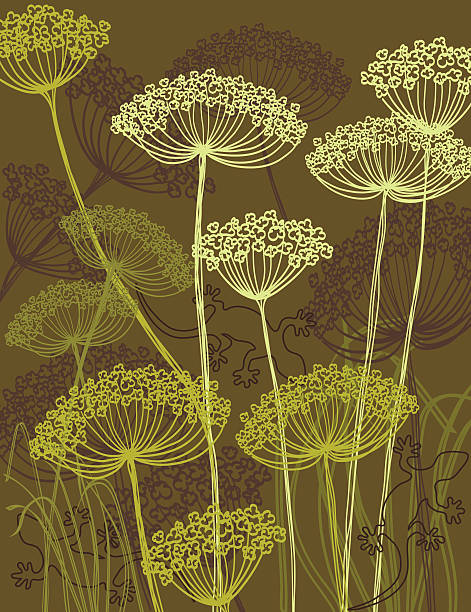 queen annes lace illustration - Clip Art Library