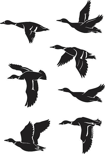 wild ducks flying - duck stock illustrations
