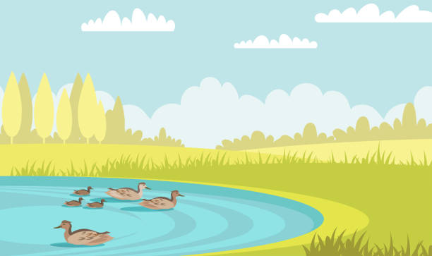 Wild ducks swim in pond flat vector illustration Wild ducks swim in pond flat vector illustration. Tranquil mallards with ducklings. Waterbird family in lake. Summer scenery green meadow with trees and poultry in water. Mother bird with babies pond stock illustrations