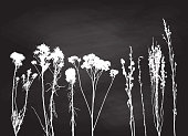 Various wild flowers and plants in white on a chalkboard background