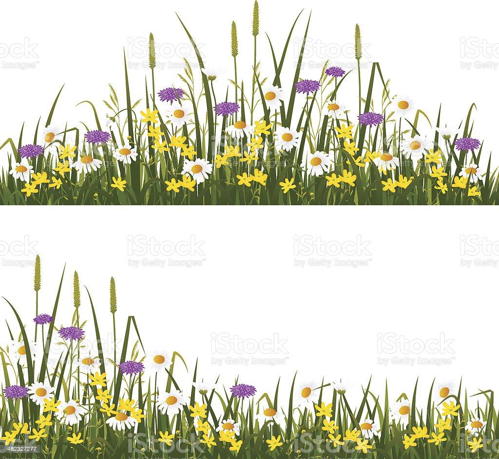 Wild flower meadow vector art illustration