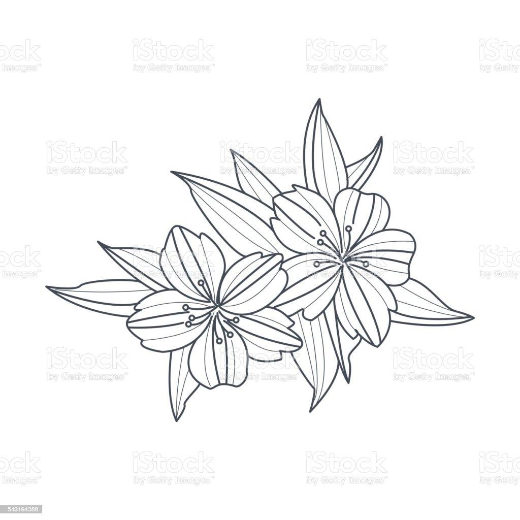 Ilustración de Flor Silvestre Monocromo Dibujo Para Libro De ...