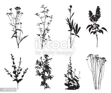 Wild Flower Vector Silhouette Stock Vector Art & More ...