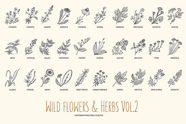 Wild flowers and herbs hand drawn set. Volume 2. Vintage vector art illustration