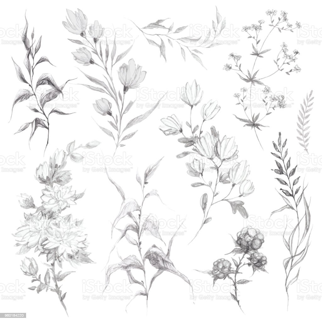Wild flowers and herbs pencil sketch illustration