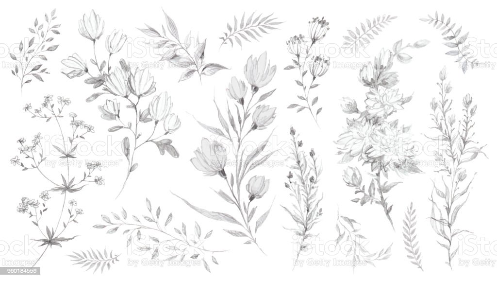 Wild Flowers And Herbs Pencil Sketch Stock Vector Art More Images