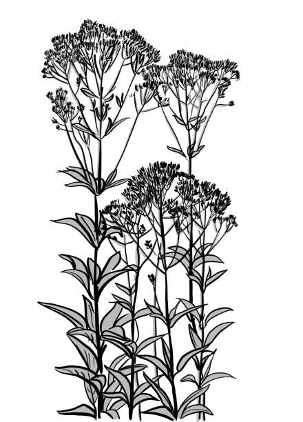 Wild Flowers Gedeihen – Vektorgrafik