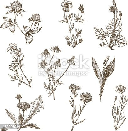 The vector drawing of the different wild flowers.