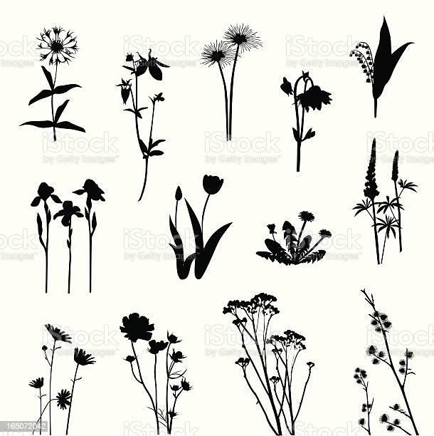 Wild flowers vector silhouette vector id165072042?b=1&k=6&m=165072042&s=612x612&h=gzalklft5bl0qa2njcsj r43c1pg9zufetofvk0ug9q=